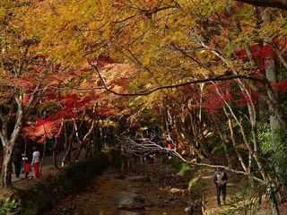 3s-小國神社宮川1090.jpg