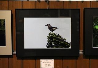 7s-野鳥展5A5169.jpg