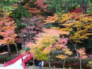 s-3_宮川紅葉C02680.jpg